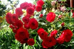 scarlet2-07